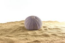 Free Urchin On Sand Stock Photos - 20596343