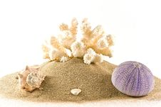 Free Coral,urchin And Mussel On Sand Stock Photo - 20596460