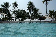 Free Coconut Palms Around The Pool Stock Photo - 20597220