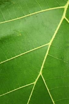 Free Leaf Stock Photography - 20599122