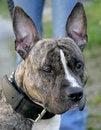 Free Nice Dog 8 Royalty Free Stock Photos - 2060128