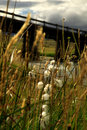Free Grasses Blowing In The Breeze Royalty Free Stock Images - 2065129