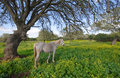 Free Gray Horse Under Branchy Tree Royalty Free Stock Images - 2069979