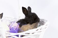 Free Easter Scene Royalty Free Stock Photos - 2061658