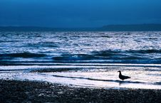 Free Seagull At Dusk In Surf Stock Photography - 2061762