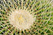 Free Cactus Stock Photography - 2063872