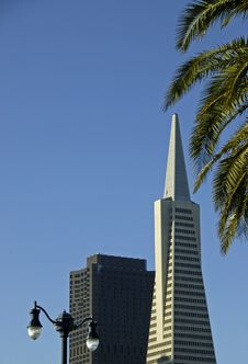 Free Transamerica Pyramid Royalty Free Stock Photo - 2064285