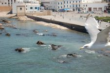 Free Seagull In Essaouira Royalty Free Stock Images - 2065219
