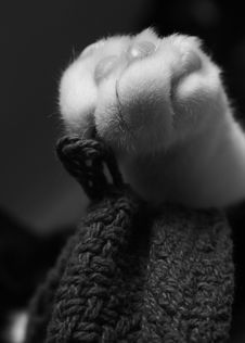 Free Sleepy Cat S Paw Royalty Free Stock Photography - 2065267