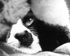 Free Sleepy Cat Stock Photo - 2065270
