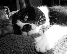 Free Sleepy Cat Royalty Free Stock Images - 2065279