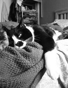 Sleepy Cat Stock Photography