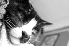 Free Sleepy Cat Stock Photos - 2065283