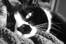 Free Sleepy Cat Stock Images - 2065294
