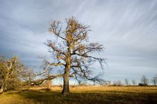 Free Old Tree In Light Stock Photos - 2065323