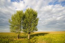 Free Two Tree On Field Stock Images - 2065604