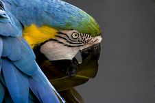 Free Macaw Araruna Royalty Free Stock Photo - 2065605