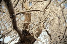 Free Hoar Frosty Tree S Stock Photography - 2066452
