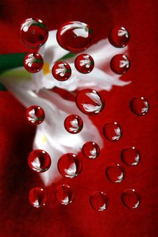 Free Iris On Red In Drops 2 Royalty Free Stock Photography - 2067487