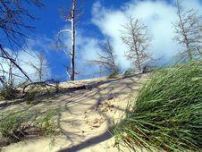 Free Polish Dunes. Royalty Free Stock Images - 2069639
