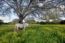 Free The Gray Horse Under Branchy Tree Stock Photos - 2069813