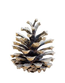Free Pine Cones Stock Photos - 20600043