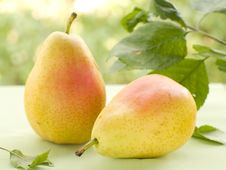 Free Pears Royalty Free Stock Photos - 20600418