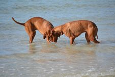 Free Clam Digging Dogs Stock Photos - 20600513