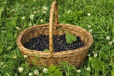 Free Berries In A Basket Stock Photo - 20600520