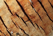 Free Bark Stock Photos - 20600573