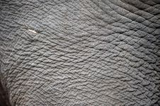 Free Elephant Skin Royalty Free Stock Photography - 20601687
