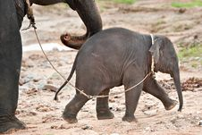 Free Baby Elephant Royalty Free Stock Images - 20601699