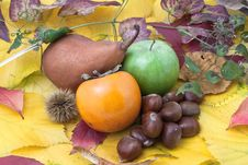 Free Autumnal Fruit Composition With Twigs Stock Images - 20602374