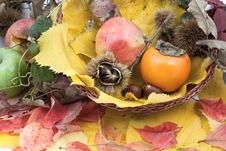 Free Autumnal Fruit Composition In A Basket Stock Images - 20602514