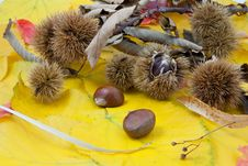 Free Autumnal Fruit Composition, Chestnuts Stock Photos - 20602553