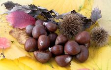 Free Autumnal Fruit Composition, Chestnuts Royalty Free Stock Photography - 20602577