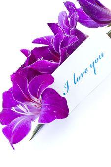 Free Declaration Of Love Royalty Free Stock Photo - 20603265