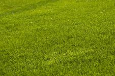 Free Lawn Stock Photos - 20603593