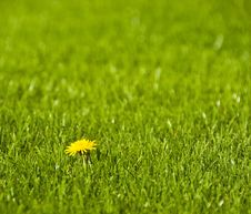A Dandelion Royalty Free Stock Images