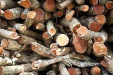 Free Logs From A Tree On Timber Cutting Royalty Free Stock Image - 20603976