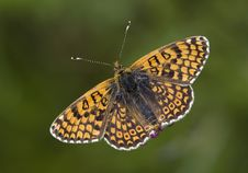 Free Beautiful Butterfly Stock Photography - 20606232