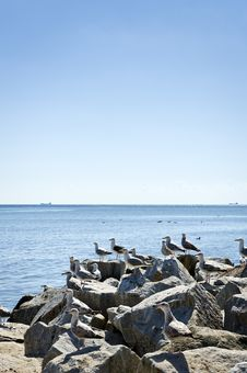 Free Seagull On The Rocks Stock Photography - 20608222