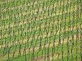 Free Rhine Vineyards Royalty Free Stock Photography - 20617517