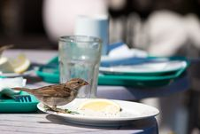 Free Sparrow In A Cafe Stock Photography - 20610162
