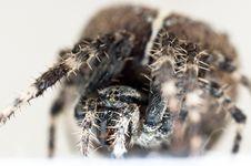 Free Big Spider On Isolated White Stock Image - 20610581