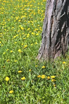 Free Yellow Flowers Blooming Royalty Free Stock Image - 20610636