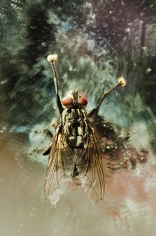 Nasty Fly Stock Photos