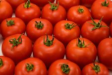 Free Tomatoes Stock Photography - 20613822