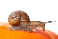 Free Garden Snail Royalty Free Stock Image - 20613966