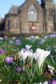 Free White Flowers Infront Of Castle. Royalty Free Stock Photos - 20614408
